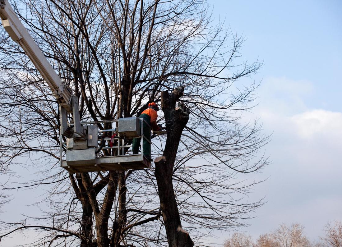 Man using a lift to maintain the safety of a tree